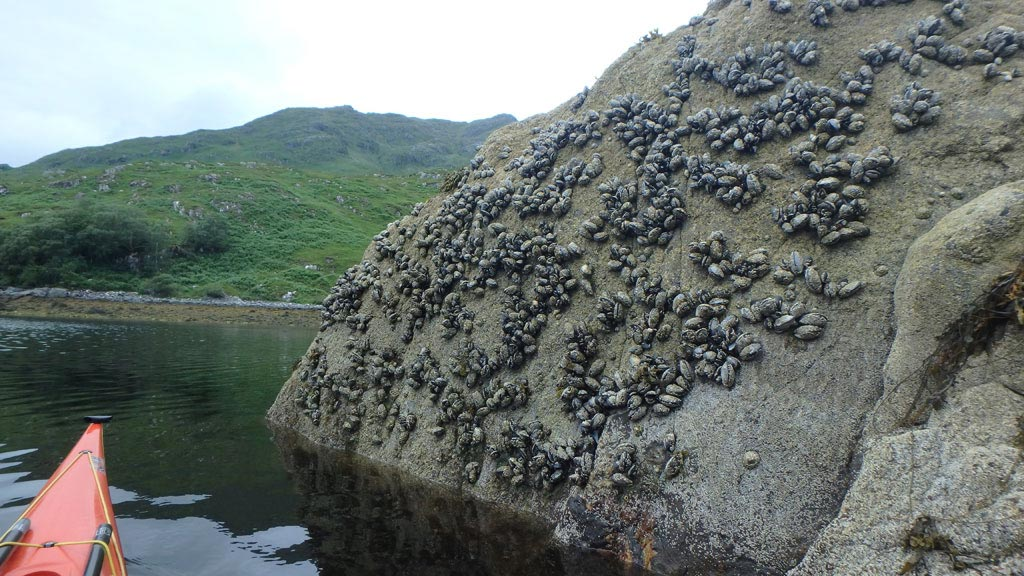 sea kayaking scotland mussels