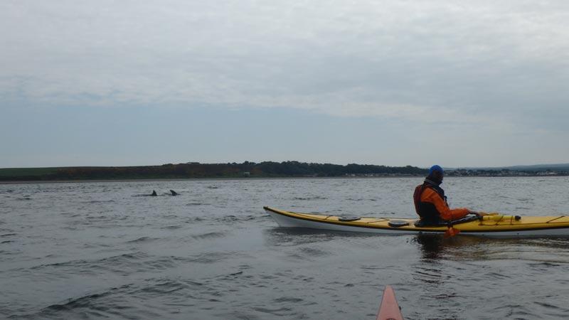 Dolphin sea kayak