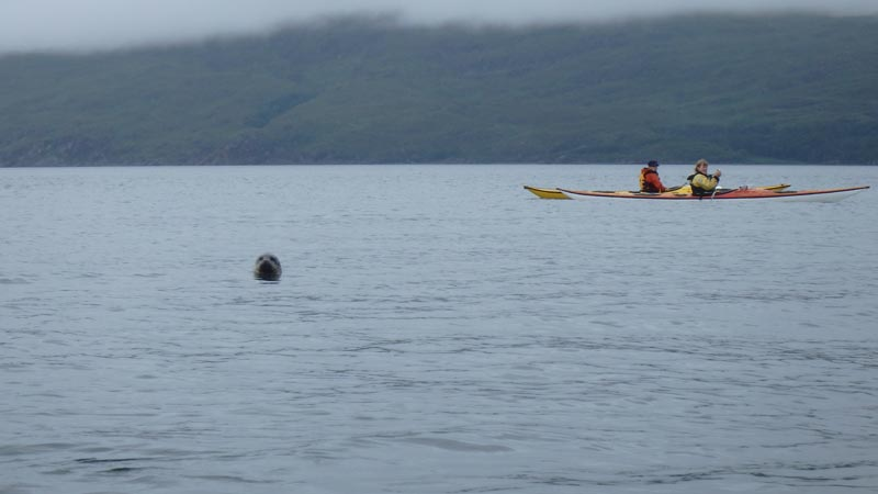 sea kayaking seals