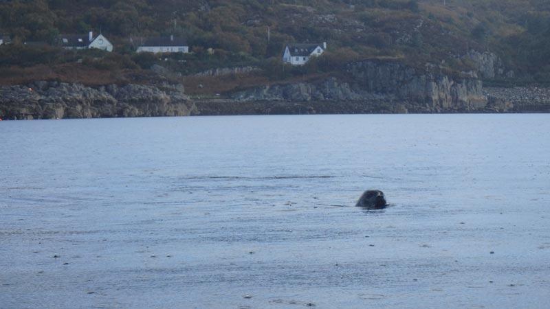 Seal near Kyle