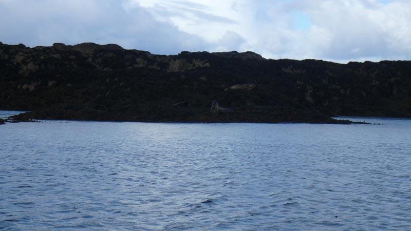Seals near Kyle